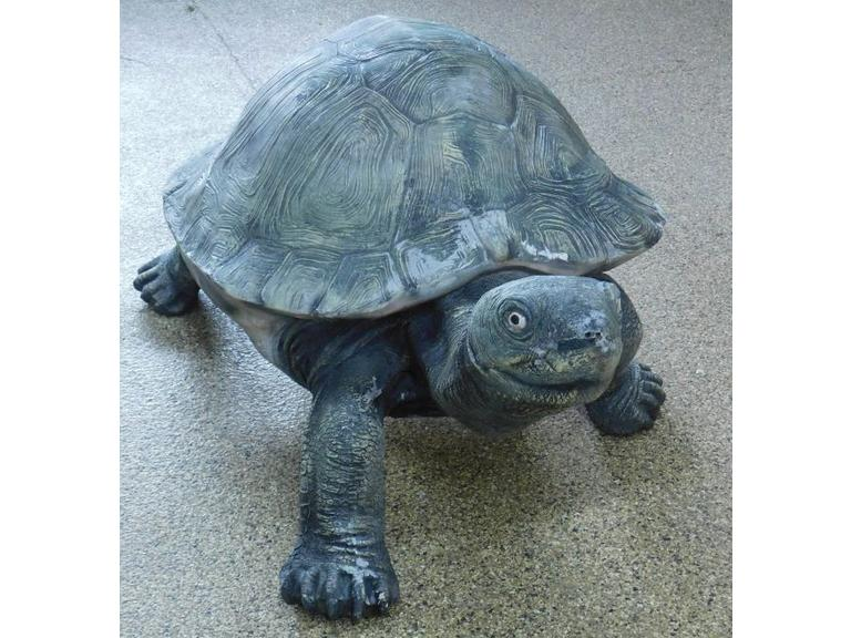 Terry the Tortoise