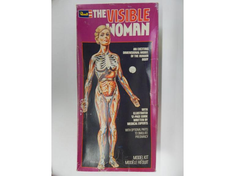 Visible Woman Model Kit