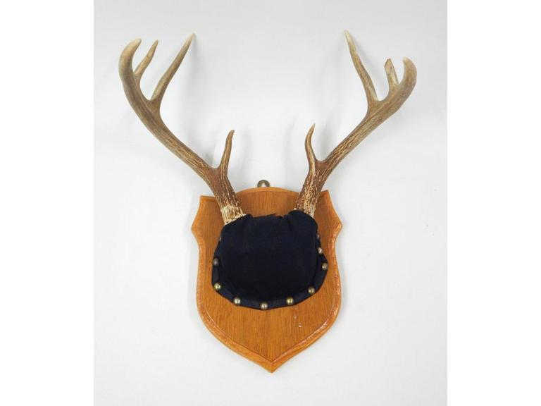 Mounted Deer Horns
