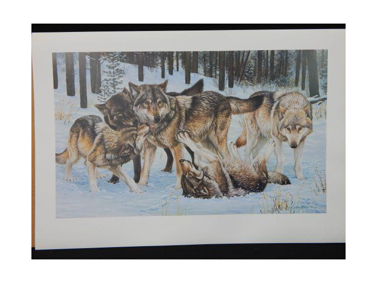 Cynthie Fisher Signed Wolf Pack Prints