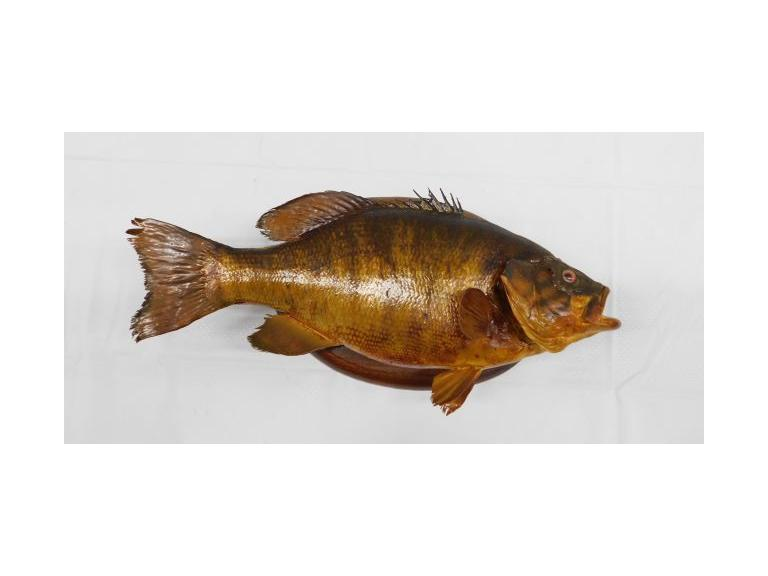 Taxidermy Fish