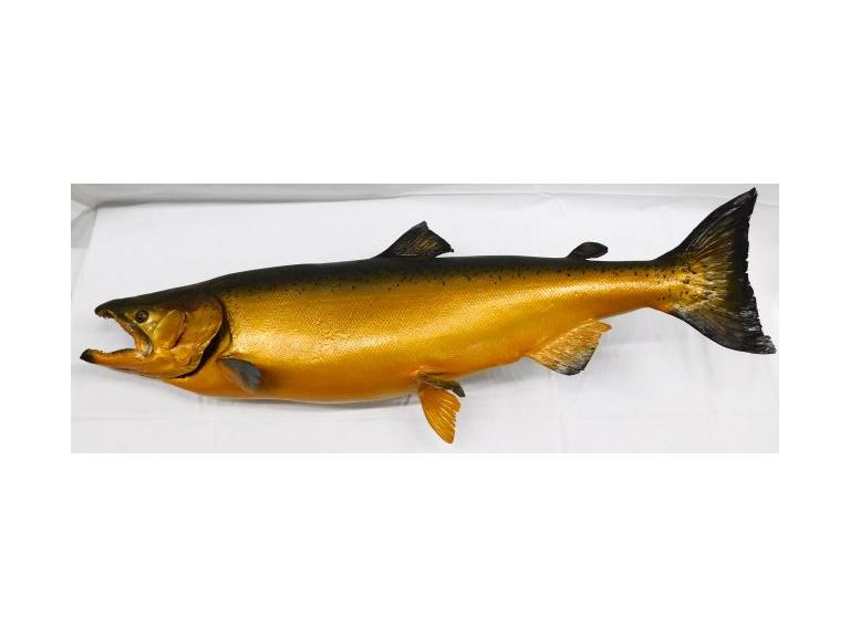 Taxidermy Steelhead Trout